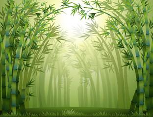 Zelena šuma bambusa