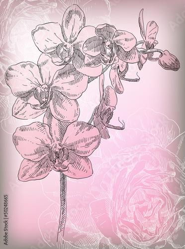 rysunek-kwiat-orchidei