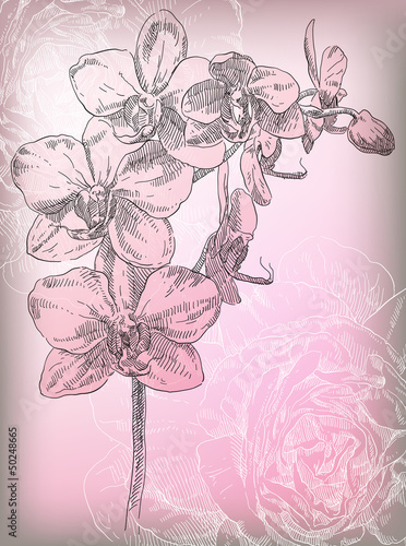 Naklejka dekoracyjna Hand drawing orchid flower