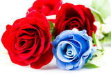 Red and blue roses