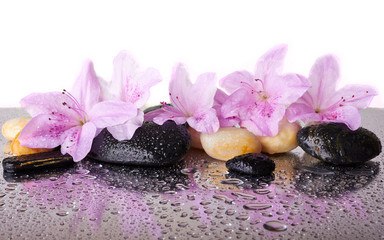 Obraz na Plexi Pink flowers and black stones