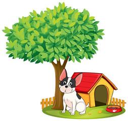 Kućica za pse i pas pod drvetom