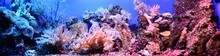 Marine Aquarium On Display In ...