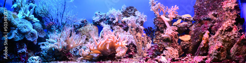 Photo Stands Coral reefs marine aquarium on display in a zoo