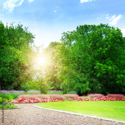 Poster de jardin Vert sunrise in beautiful summer park