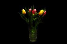 Five Glowing Tulips On The Dar...