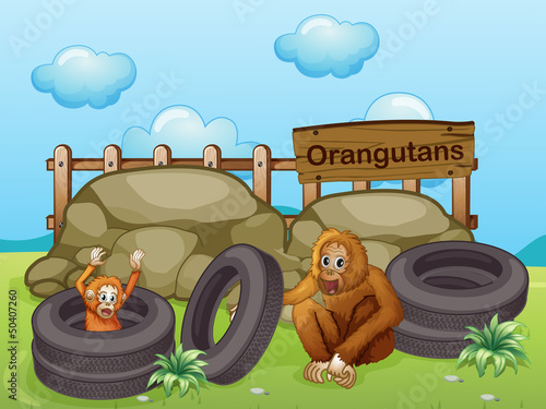 Foto op Aluminium Zoo Two Orangutans near the big rocks