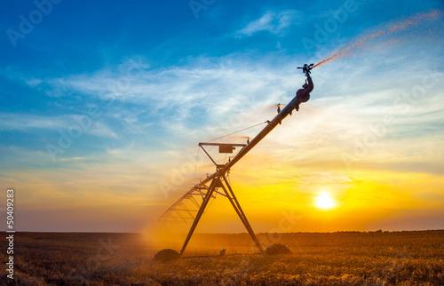 Cuadros en Lienzo  Irrigation pivot on the wheat field at summer sunrise