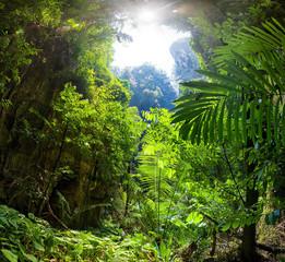 Fototapeta Jungle Forest