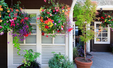 Flowers In The Hanging Baskets...