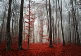 Jesienna mgła w lesie