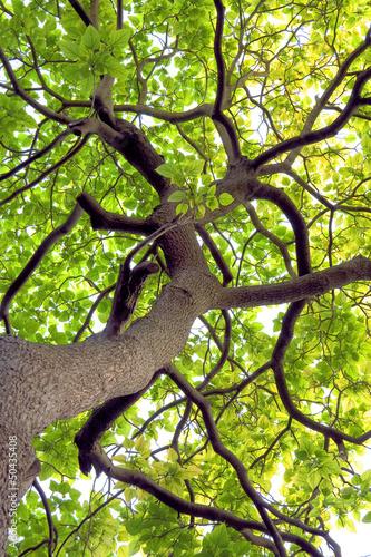 galezie-i-pnie-drzew-na-wiosne