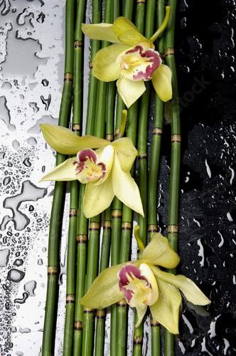 trzy-orchidea-z-bambusowym-gajem-na-mokrym-czarnym-tle