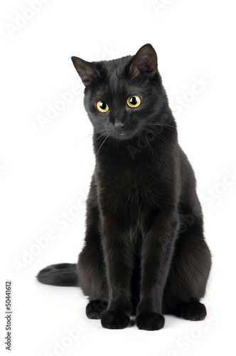 Fotografía Cute black cat isolated on white
