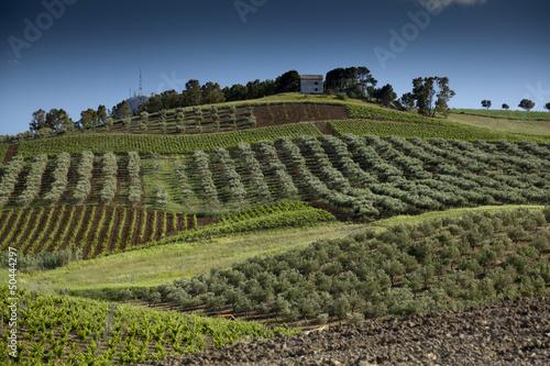 Photo Alcamo countryside.