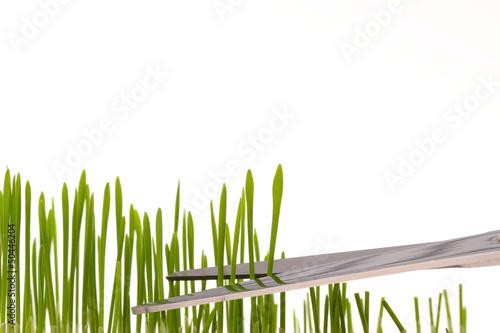 Fotografering  Rasenpflege penibel