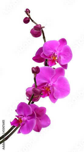 delikatna-piekna-orchidea-odizolowywajaca-na-bielu