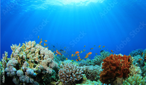 Door stickers Coral reefs Coral Reef Underwater