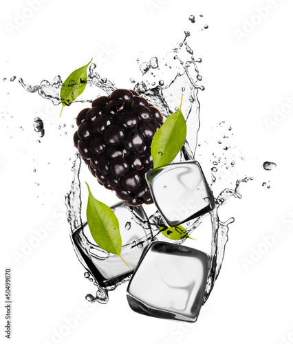 Poster In the ice Blackberry with ice cubes, isolated on white background