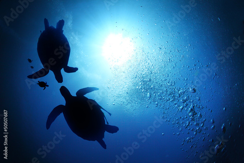 Poster Tortue Sea