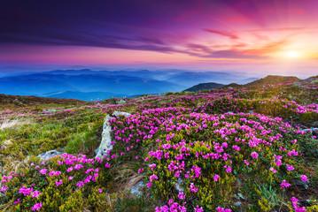 Naklejka flower