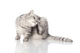 Drapiący się kotek
