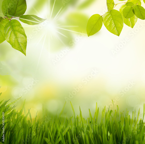 Fototapeta łąka laka-i-zielone-liscie