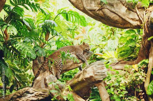 Poster Leopard Lying (sleeping) leopard on tree branch