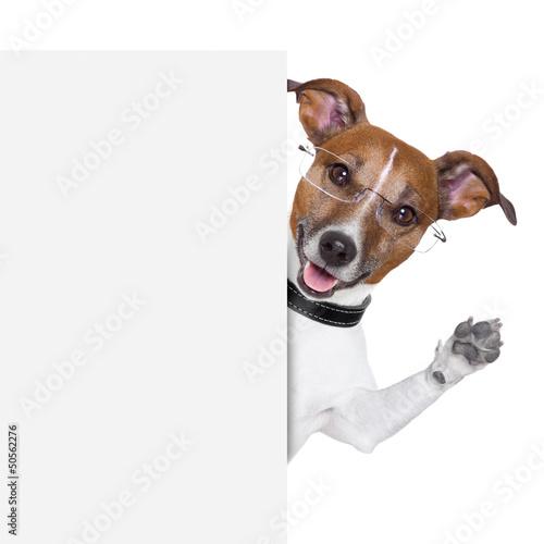Deurstickers Franse bulldog dog banner