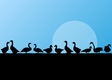 Farm Duck And Goose Silhouette...