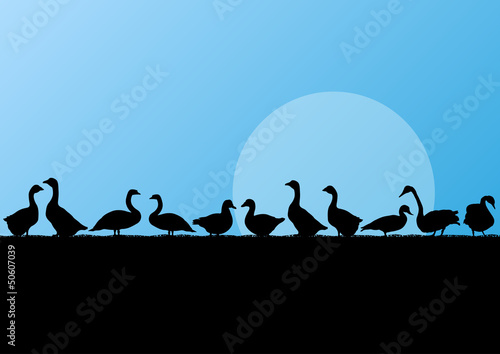 Farm duck and goose silhouettes in countryside landscape Wallpaper Mural