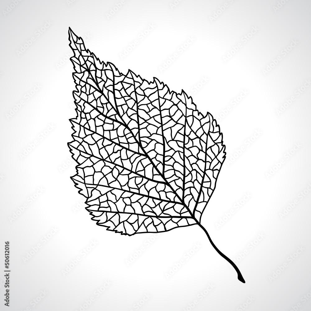 Black macro leaf of birch tree isolated.