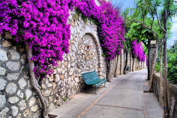 Plakat Vibrant flower draped pathway in Capri, Italy