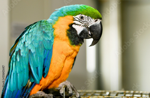 Fotografie, Obraz  Parrot  sitting on cage.