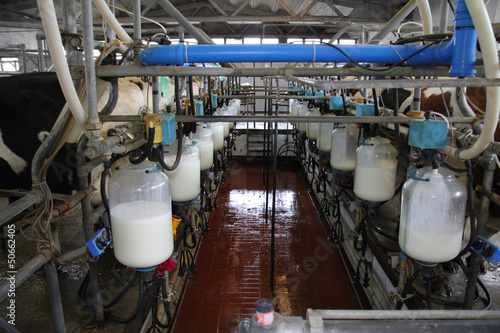 Fotografie, Obraz  Dairy farm, milking cows