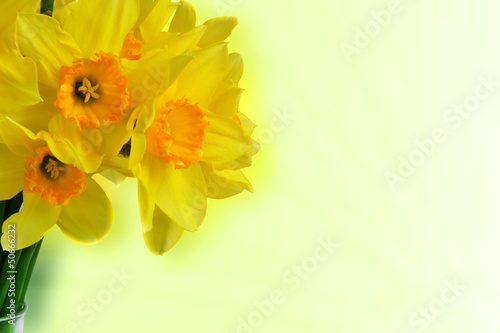 Recess Fitting Narcissus Daffodils bouquet