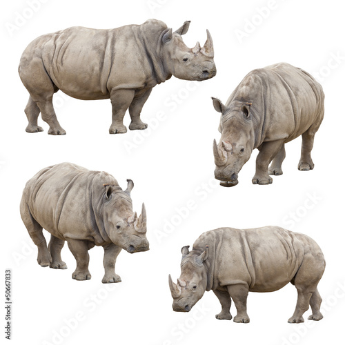 Tuinposter Neushoorn Set of Rhinoceros Isolated on a White Background