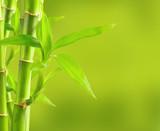 Fototapeta Sypialnia - Bamboo background with copy space