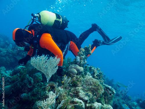 Foto op Canvas Duiken diver