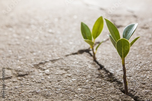 Keuken foto achterwand Planten weed growing through crack in pavement