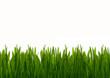 Zielona wiosenna trawa