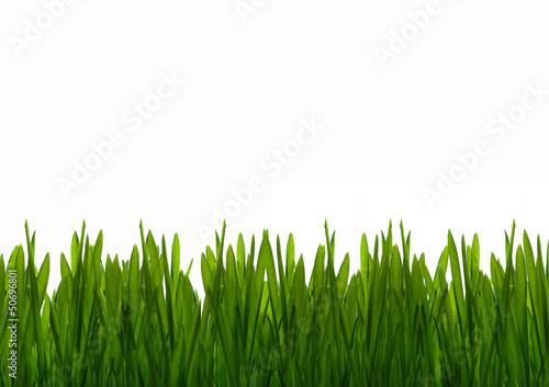 Obraz Zielona wiosenna trawa - fototapety do salonu