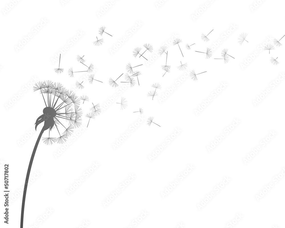 Fototapety, obrazy: Vector Illustration of Dandelion