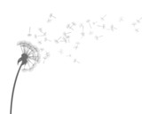 Fototapeta Dmuchawce - Vector Illustration of Dandelion