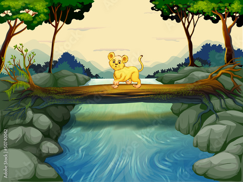 Canvas Prints River, lake A young tiger crossing the river