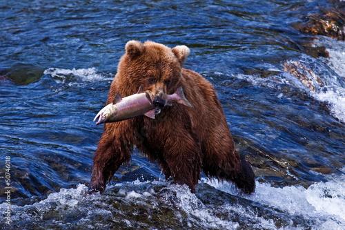 Fotografie, Obraz  Grizly Bear at Alaska