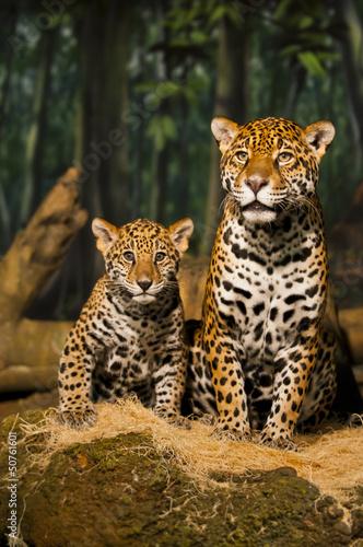 Poster Leopard Jaguar Family