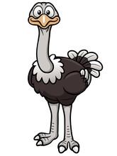 Vector Illustration Of Cartoon Ostrich