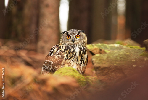 Leinwandbilder - Owl in a forest