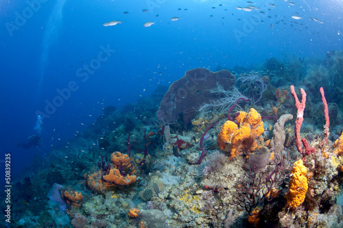 Canvas Prints Coral reefs Dark Blue St Lucia